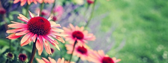 flowers peachy_640x240
